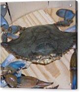 Blue Claw Crab Acrylic Print