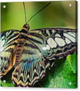 Blue Clipper - Looking Up Acrylic Print