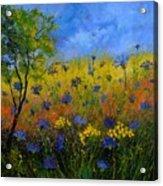 Blue Cornflowers 7761 Acrylic Print