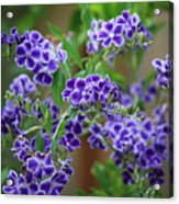 Blue Cottage Flowers Acrylic Print