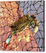 Blue Crab Acrylic Print
