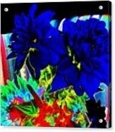 Blue Dahlias Acrylic Print