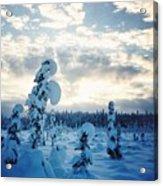 Blue Days Acrylic Print