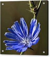 Blue Dream.. Acrylic Print