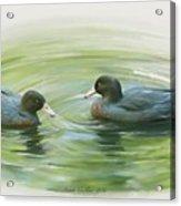 Blue Ducks  Acrylic Print