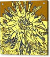 Blue-edged Dahlia Acrylic Print
