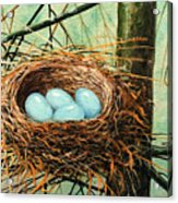 Blue Eggs In Nest Acrylic Print