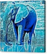 Blue Elephant Acrylic Print