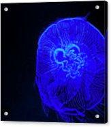 Blue Energy - Jellyfish Acrylic Print