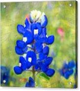 Blue-est Of Blues Acrylic Print