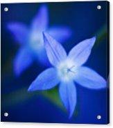 Blue Etoile Acrylic Print