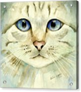 Blue-eyed Cat Acrylic Print