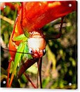 Blue Eyed Grasshopper 2 Acrylic Print