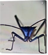 Blue-eyed Monster Acrylic Print