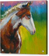 Blue-eyed Paint Horse Oil Painting Print Acrylic Print