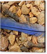 Blue Feather Acrylic Print