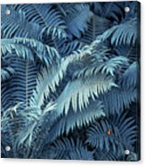 Blue Fern Leaves Abstract. Nature In Alien Skin Acrylic Print