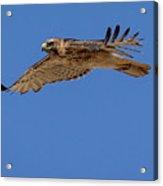 Blue Flight Acrylic Print