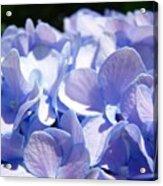 Blue Floral Art Prints Blue Hydrangea Flower Baslee Troutman Acrylic Print