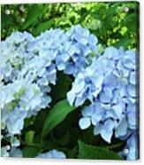 Blue Floral Hydrangea Flower Summer Garden Basle Troutman Acrylic Print