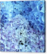 Blue Floral Hydrangreas Flowers Art Baslee Troutman Acrylic Print