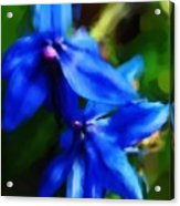 Blue Flower 10-30-09 Acrylic Print