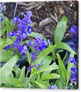 Blue Flower B6 Acrylic Print
