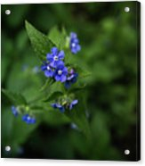 Blue Flower In Spring Acrylic Print