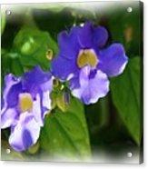 Blue Flower Acrylic Print