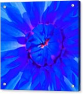 Blue Flower Acrylic Print
