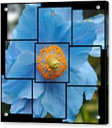 Blue Flower Photo Sculpture  Butchart Gardens  Victoria Bc Canada Acrylic Print