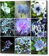 Blue Flowers All Acrylic Print