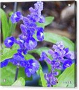 Blue Flowers B4 Acrylic Print
