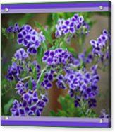 Blue Flowers With Colorful Border Acrylic Print