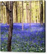 Blue Forest In Shadow Acrylic Print
