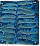Blue Frond Acrylic Print
