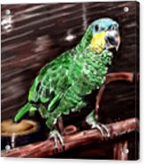 Blue-fronted Amazon Parrot Acrylic Print