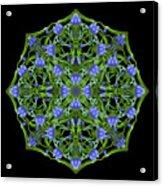 Blue Gentian Lattice Acrylic Print