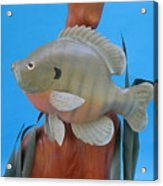 Blue Gill Acrylic Print by Jack Murphy