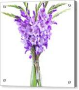 Blue  Gladiolus Acrylic Print