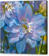 Blue Glory Acrylic Print