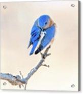 Blue Grace Acrylic Print