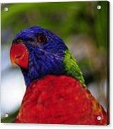 Blue Head Bird Acrylic Print