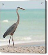 Blue Heron And The Sea Acrylic Print