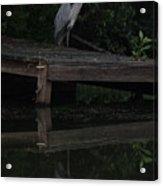 Blue Heron At Dusk Acrylic Print