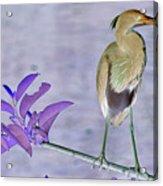 Blue Heron Colorized Acrylic Print