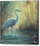 Blue Heron Fishing Acrylic Print