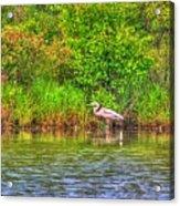 Blue Heron-in The Swamp-20 Acrylic Print