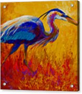 Blue Heron Acrylic Print by Marion Rose