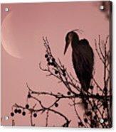 The Heron And The Moon Acrylic Print